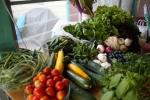 farmers market 7-1-12 004